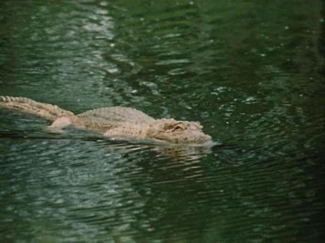 """Таких """"киноляпов"""" в фильме немало. Например, съемочной группе не понравилось, каким получился эпизод в Космозоо, когда Алиса пытается прочитать мысли крокодила. Хищника смастерили из пенопласта, и, в принципе, он был очень похож на настоящего аллигатора. Но водолазы, управлявшие макетом, недостаточно глубоко опустили его в воду. Было видно, что это ненастоящий крокодил, да еще слишком легкий, плавающий на самой поверхности. Особо внимательные зрители могут даже рассмотреть водолазов. На съемки """"Гостей из будущего"""" ушли два долгих года. За это время многие дети, занятые в съемках, успели вырасти. Это особенно хорошо заметно, если учесть, что сначала снимались сцены с натурными съемками в """"настоящем"""", а """"будущее"""" отложили на последний этап. У авторов сериала нашего детства сложились разные судьбы. К сожалению, для некоторых из них будущее оказалось не таким светлым, какое обещала Алиса. Но ведь многие из тех, кто помнит фильм, и сегодня не перестают мечтать флипнуть до космопорта, прогуляться по Космозоо или открыть дверь автобуса в Минске и выйти где-нибудь на Мальдивах. Получится ли это когда-нибудь реализовать? Когда во время одного из интервью у теперь уже взрослого исполнителя роли Бори Мессерера спросили, хотел бы он жить в будущем, показанном в фильме, актер ответил: """"Вопрос поставлен некорректно. Жить в этом мире невозможно, потому что он настолько нереальный…"""" """"Было ясно даже в 1984 году, что все, что там изображается, это не футурология. Нет. Это какой-то абсолютно стерильный мир, который нужен был только для воплощения определенных идей. Он нечеткий и нереальный. Как будто в центре фокус, а по краям все расплывается… Этот мир носит, к сожалению, на мой взгляд, некий отпечаток утопий шестидесятых годов, из той же серии, что и Стругацкие. Кругом там наука, научно-технический прогресс рванул, маленькие дети занимаются наукой. А сейчас мы видим, что наука и у нас, и за границей совершенно не имеет тенденции к занятию ею того места, которое мечталось Булычевым и"""