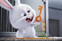 картинки для фильму Секрети домашніх тварин