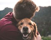 Душевные фильмы о собаках