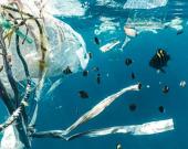 Собирал пластик 20 лет: о 90-летнем рыбаке-экоактивисте сняли фильм
